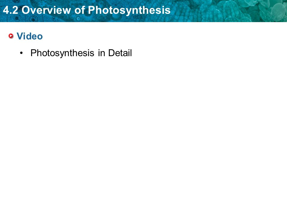 Video Photosynthesis in Detail