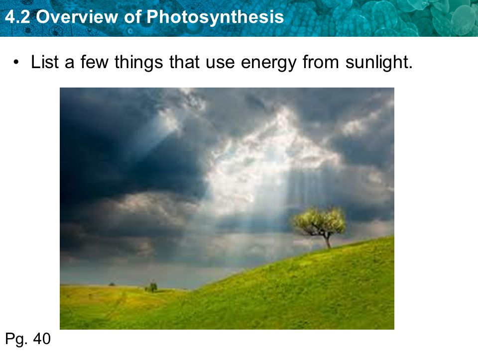 List a few things that use energy from sunlight.