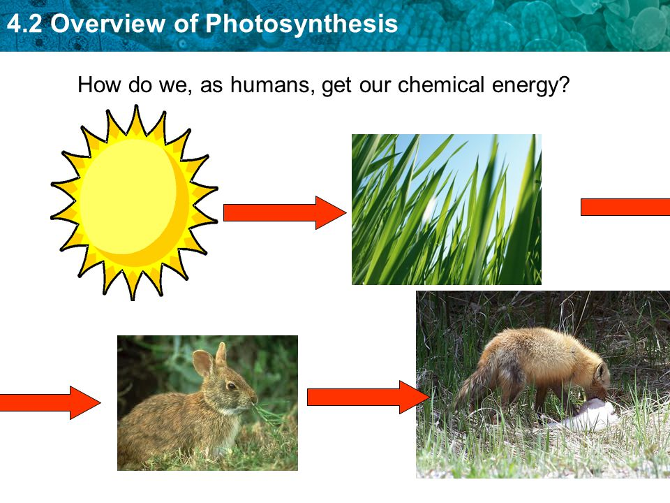 How do we, as humans, get our chemical energy