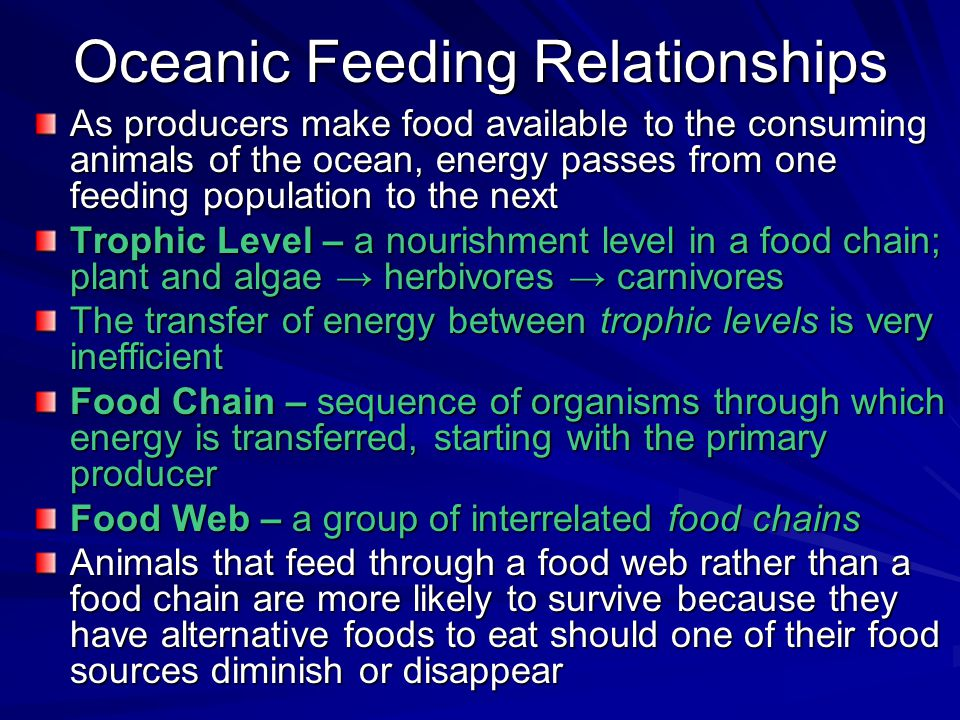 Oceanic Feeding Relationships