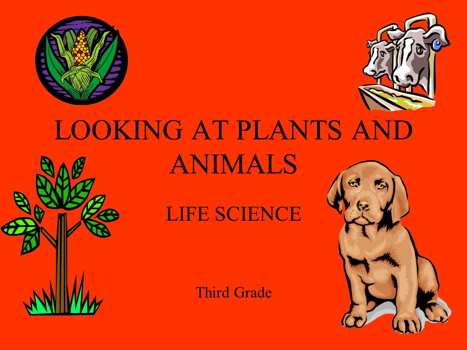 LOOKING AT PLANTS AND ANIMALS