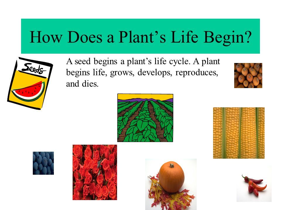 How Does a Plant's Life Begin
