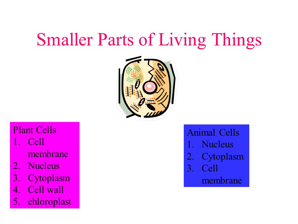 Smaller Parts of Living Things