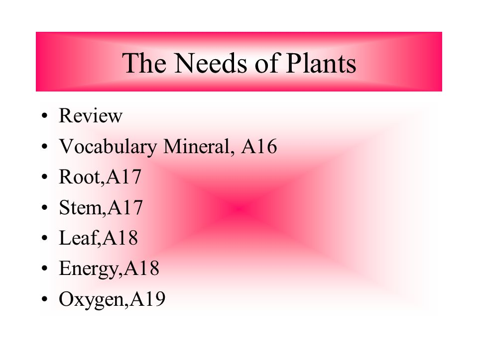 The Needs of Plants Review Vocabulary Mineral, A16 Root,A17 Stem,A17