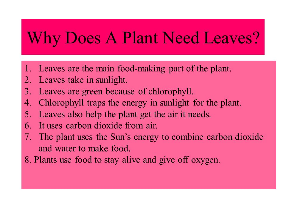 Why Does A Plant Need Leaves
