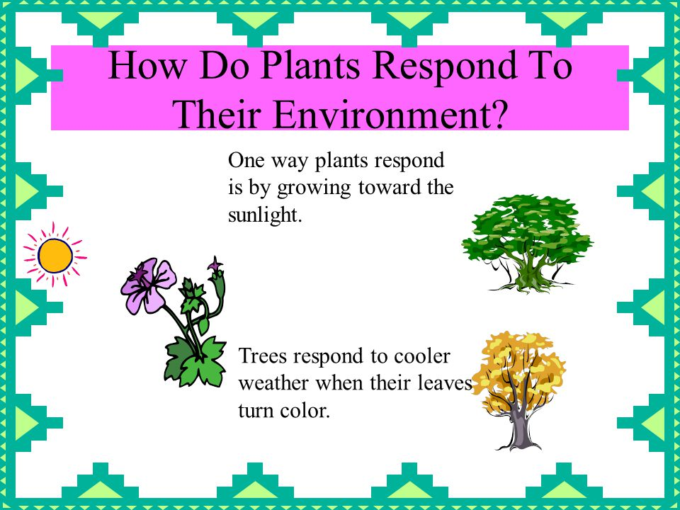 How Do Plants Respond To Their Environment