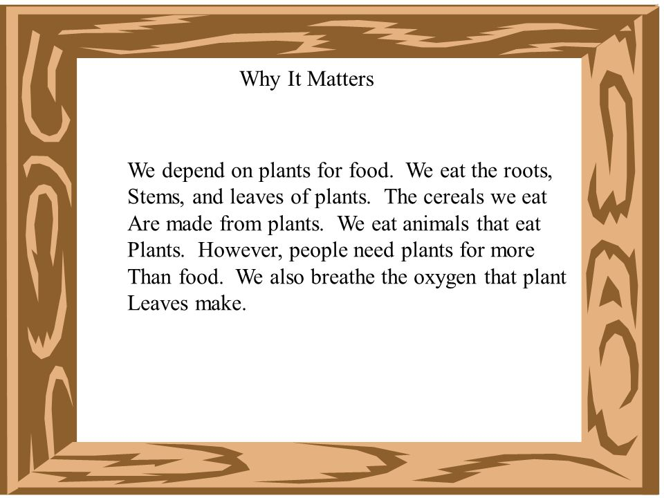 Why It Matters We depend on plants for food. We eat the roots, Stems, and leaves of plants. The cereals we eat.