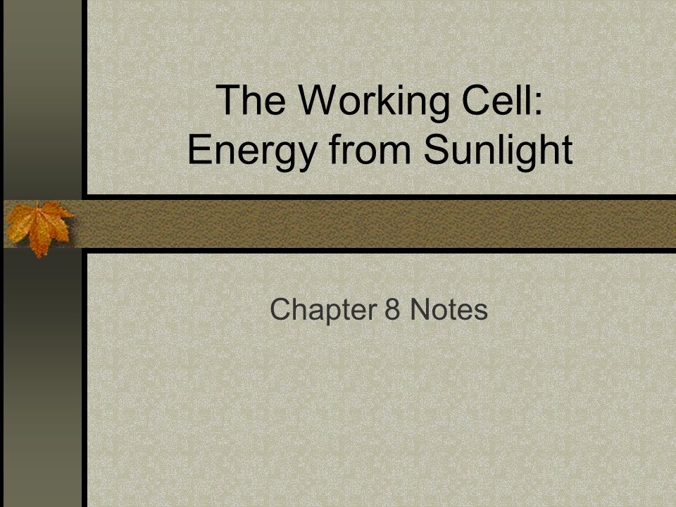 The Working Cell: Energy from Sunlight