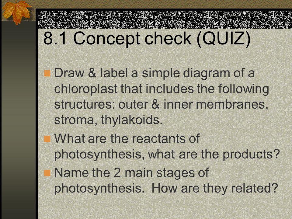 8.1 Concept check (QUIZ)