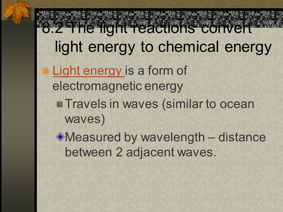 8.2 The light reactions convert light energy to chemical energy