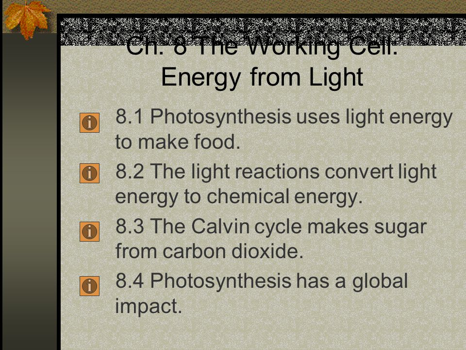 Ch. 8 The Working Cell: Energy from Light