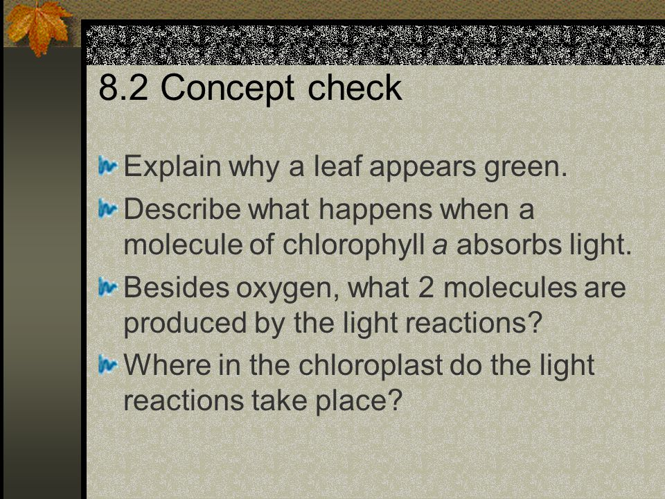 8.2 Concept check Explain why a leaf appears green.