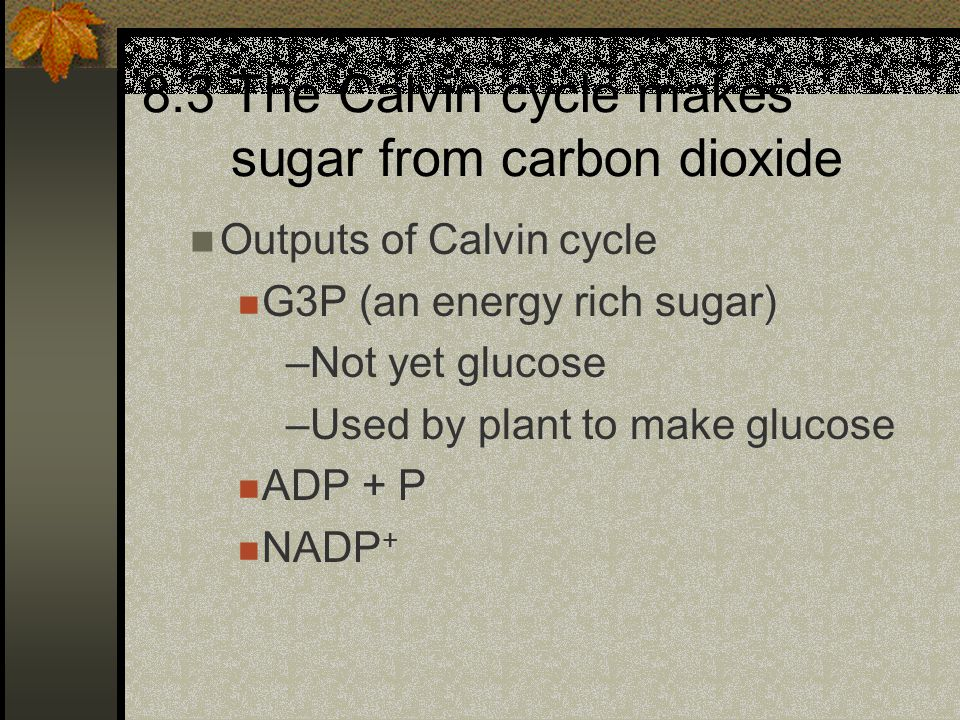 8.3 The Calvin cycle makes sugar from carbon dioxide