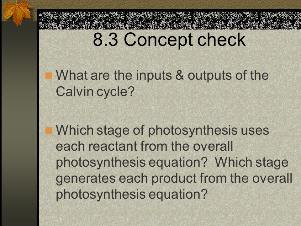 8.3 Concept check What are the inputs & outputs of the Calvin cycle