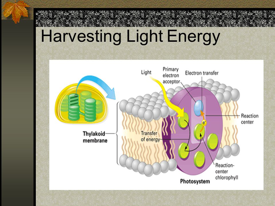 Harvesting Light Energy