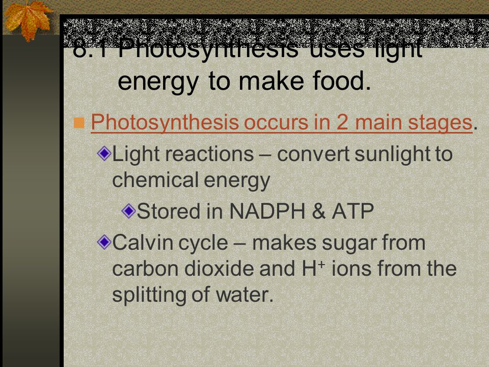 8.1 Photosynthesis uses light energy to make food.
