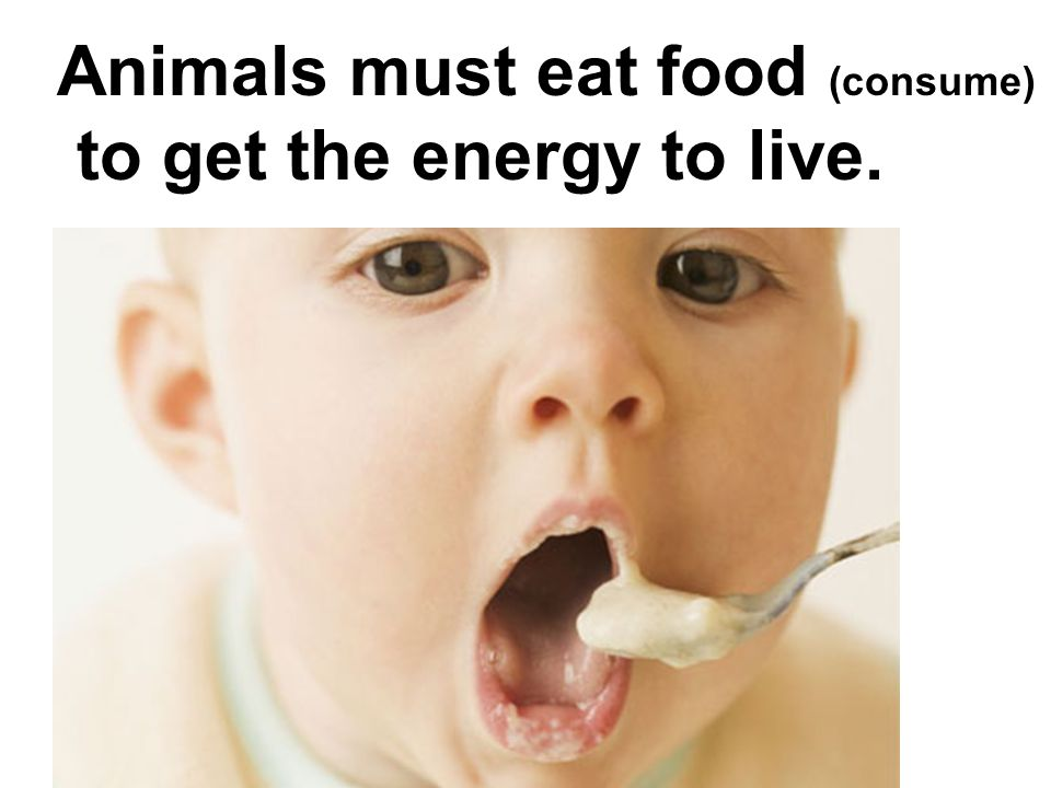Animals must eat food (consume) to get the energy to live.