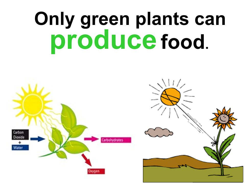 Plants Plants are producers. Only green plants can produce food.