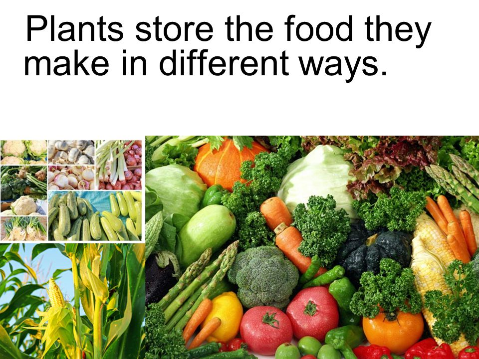 Plants store the food they make in different ways.