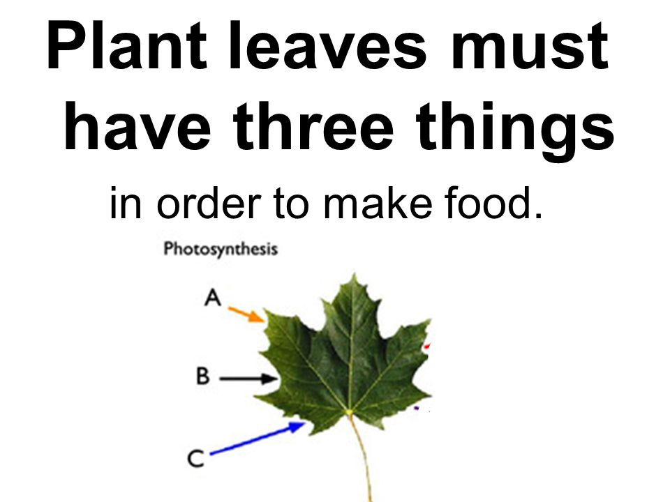 Plant leaves must have three things