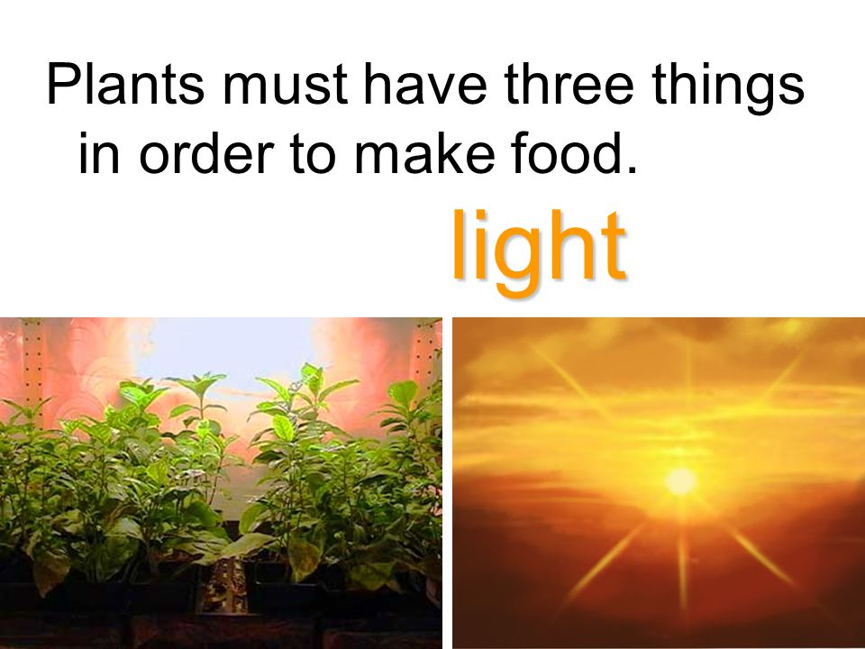 Plants must have three things in order to make food.
