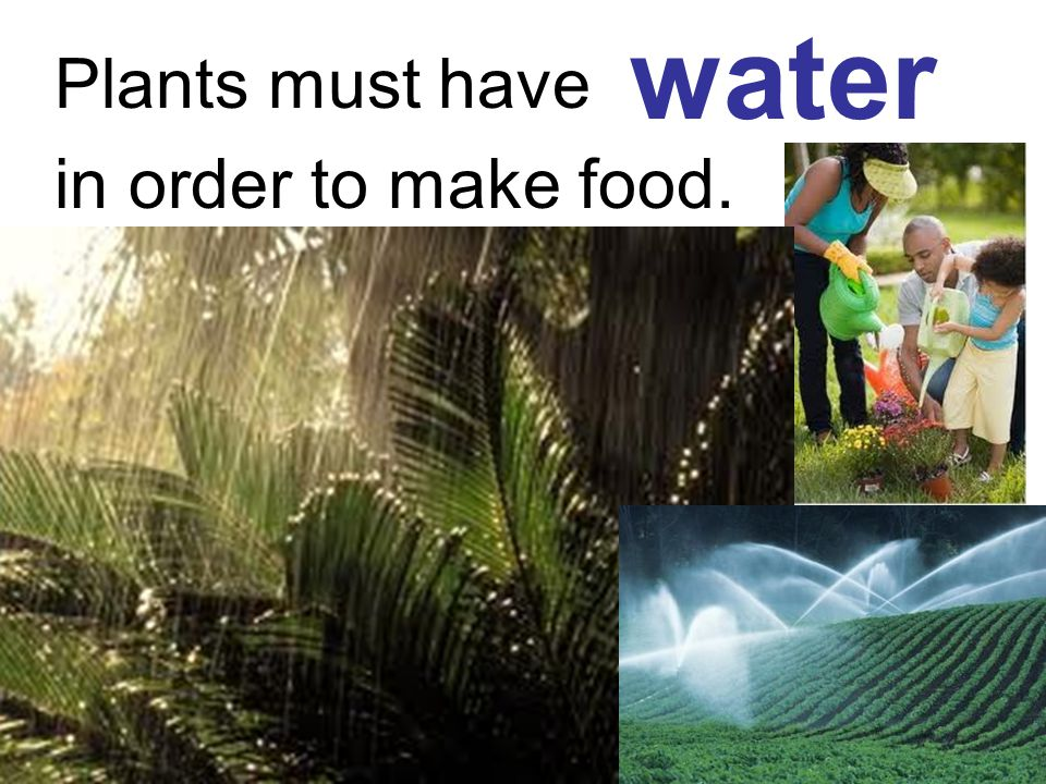 water Plants must have in order to make food.