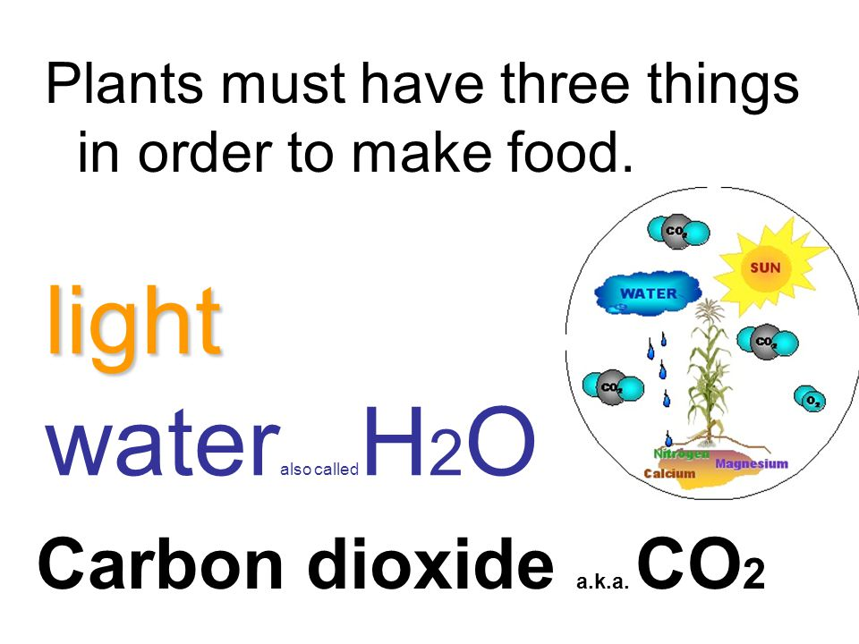 light wateralso calledH2O Carbon dioxide a.k.a. CO2