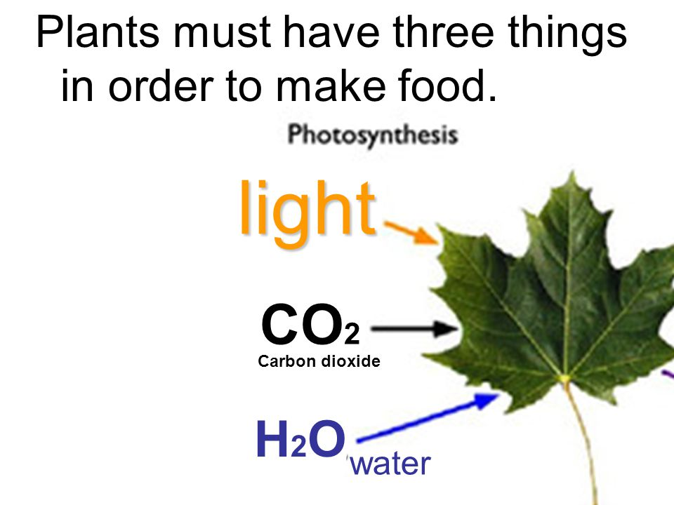 light CO2 H2O Plants must have three things in order to make food.