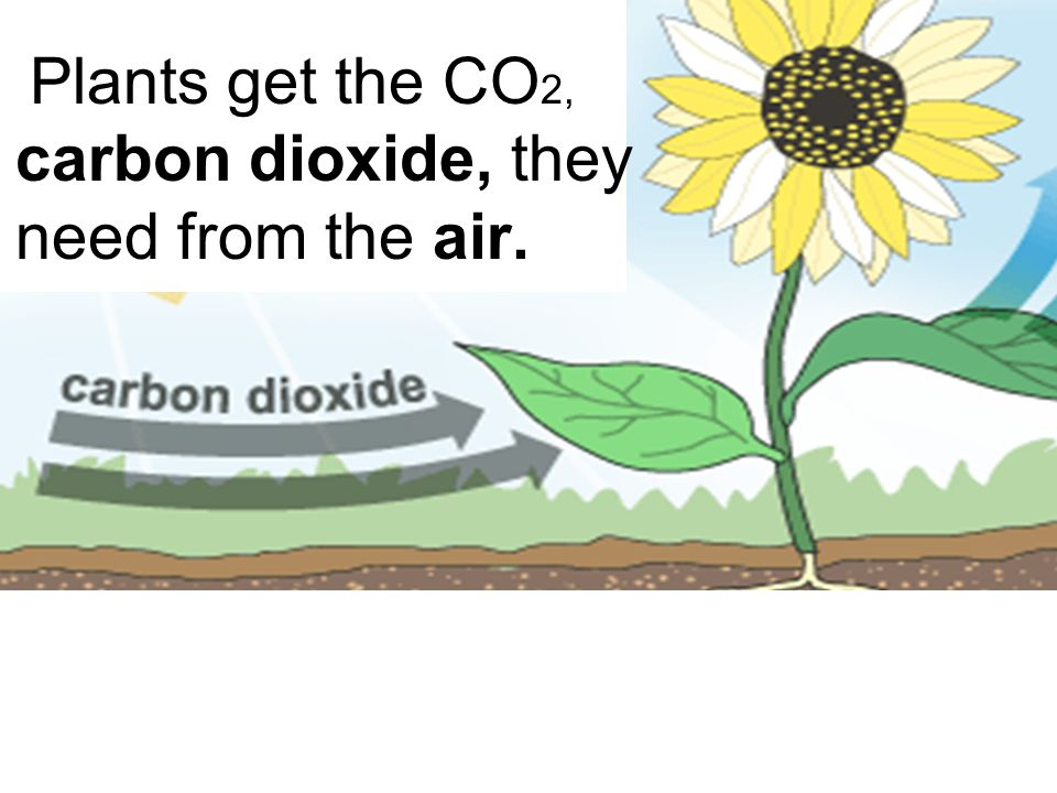 Plants get the CO2, carbon dioxide, they need from the air.