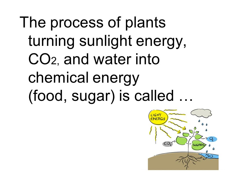 The process of plants turning sunlight energy, CO2, and water into chemical energy (food, sugar) is called …