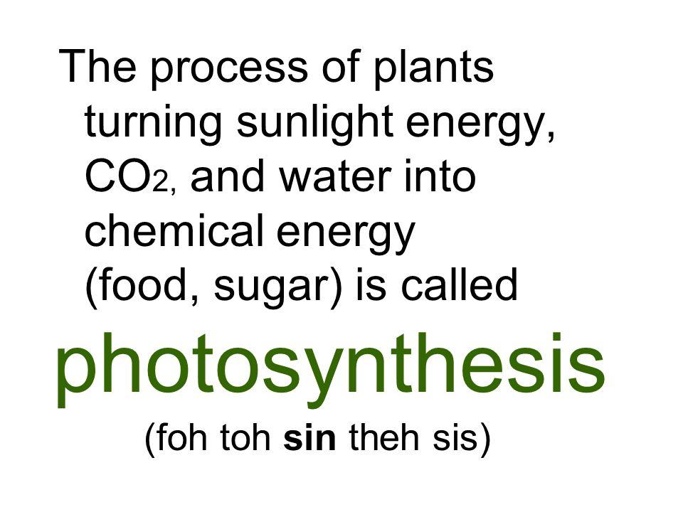 The process of plants turning sunlight energy, CO2, and water into chemical energy (food, sugar) is called