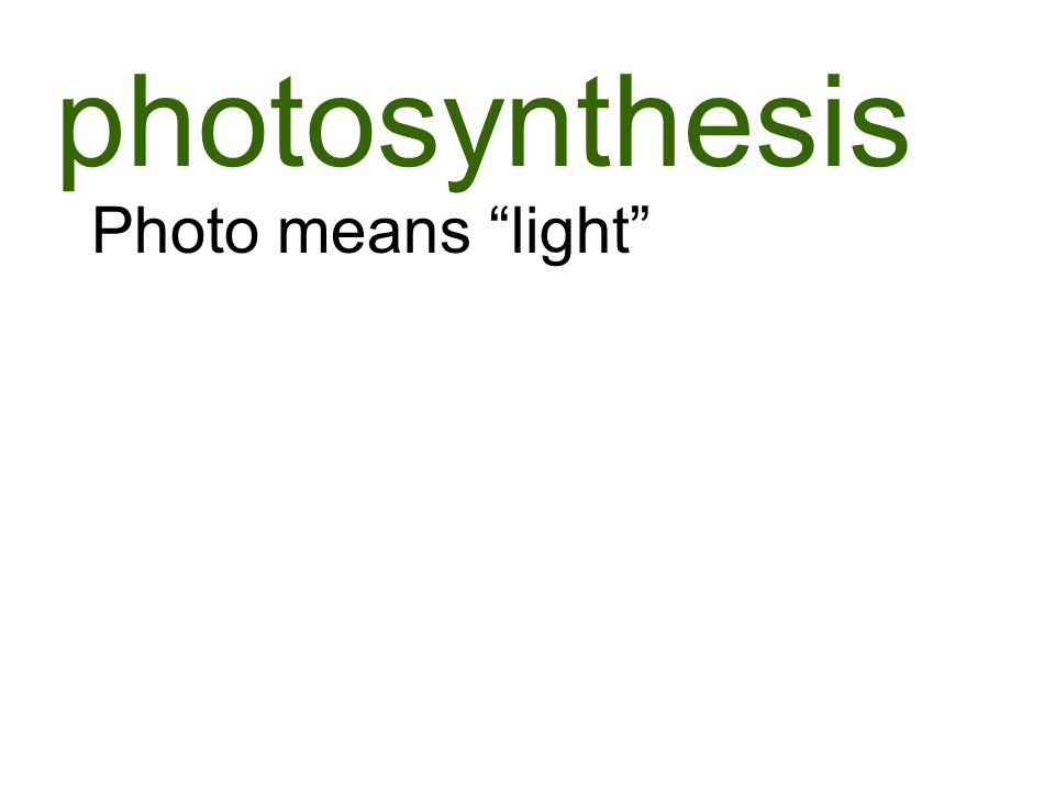 photosynthesis Photo means light