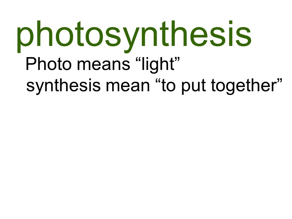 photosynthesis Photo means light synthesis mean to put together