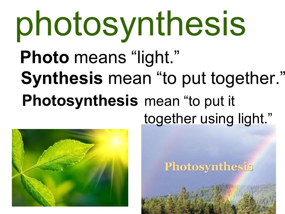 photosynthesis Photo means light. Synthesis mean to put together.
