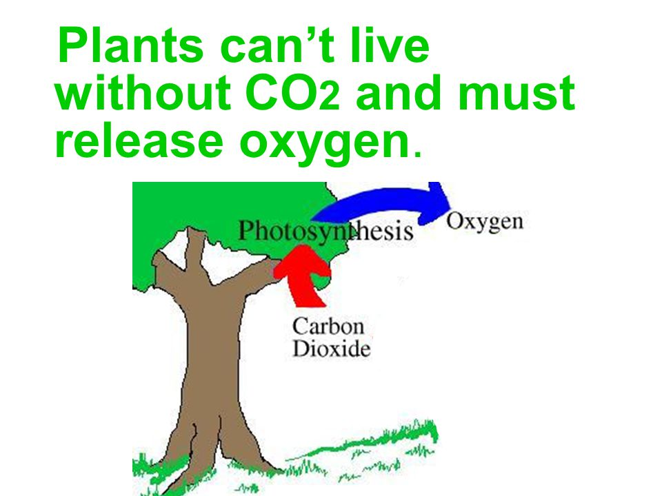 Plants can't live without CO2 and must release oxygen.
