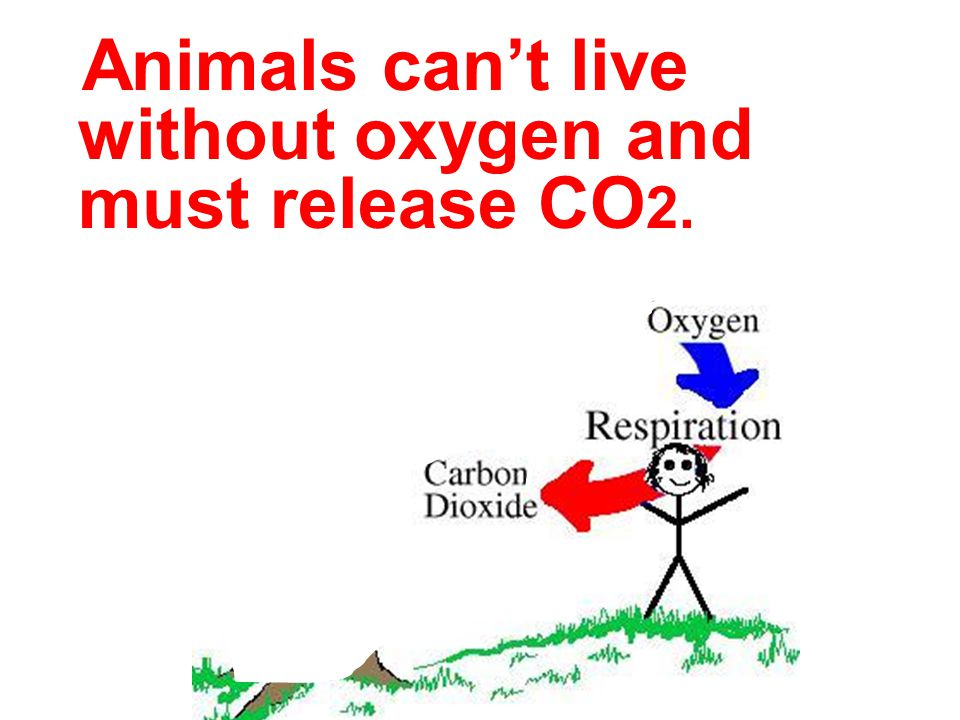Animals can't live without oxygen and must release CO2.