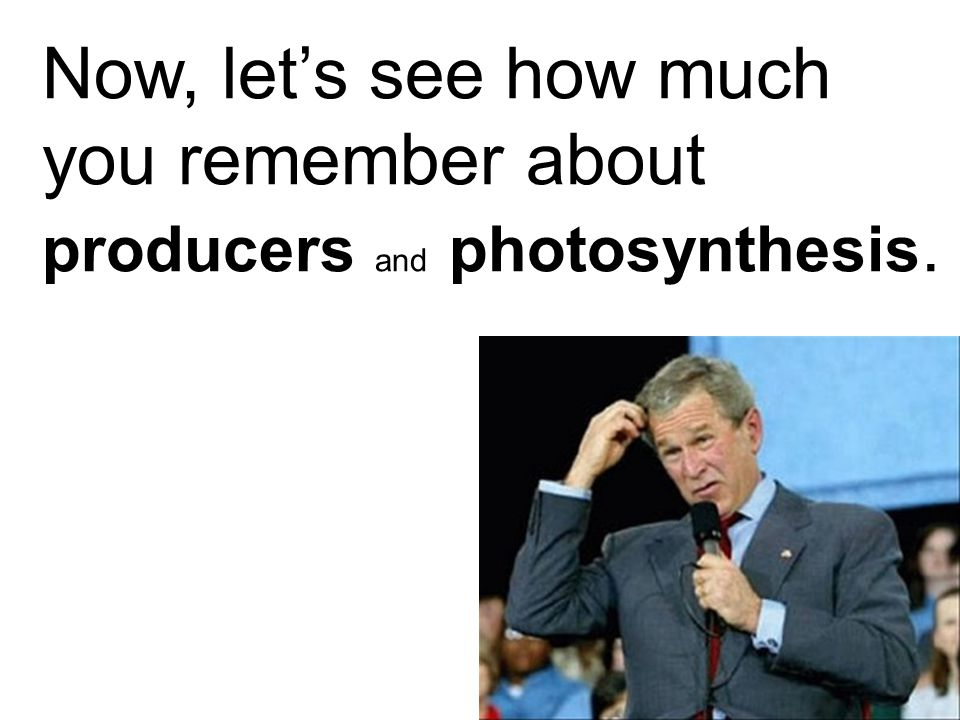 Now, let's see how much you remember about producers and photosynthesis.