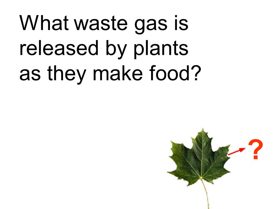 What waste gas is released by plants as they make food
