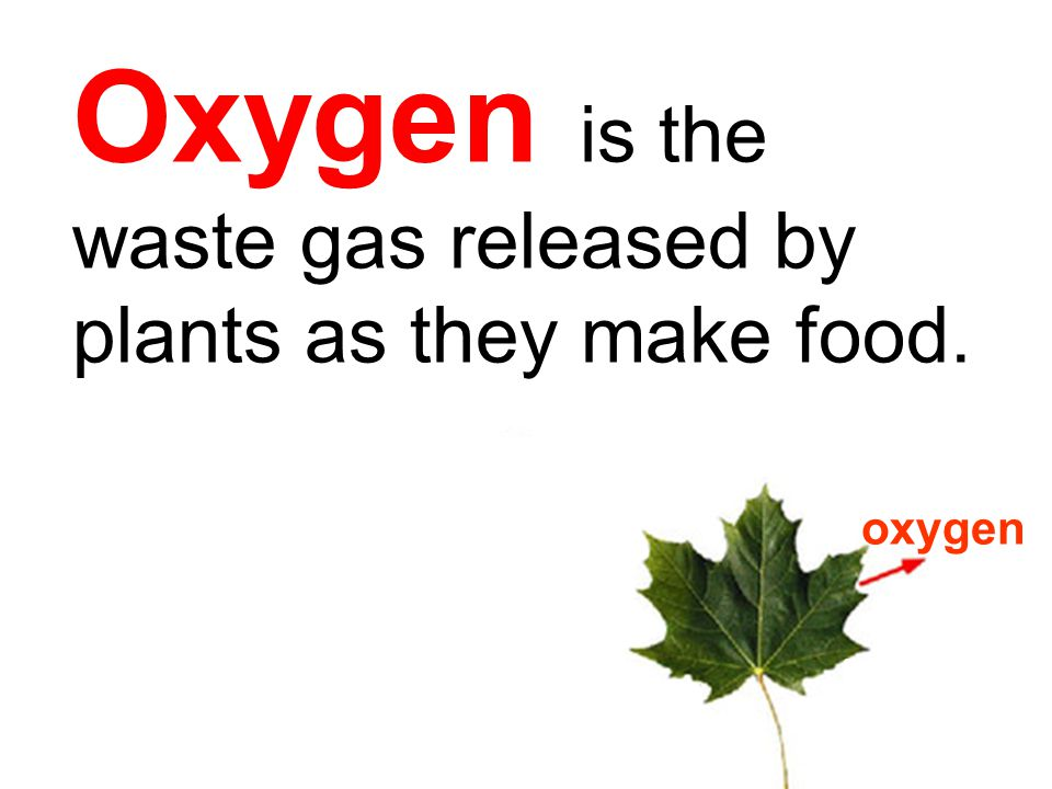 Oxygen is the waste gas released by plants as they make food.