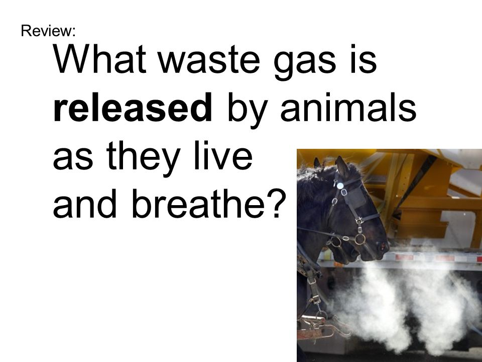 What waste gas is released by animals as they live and breathe