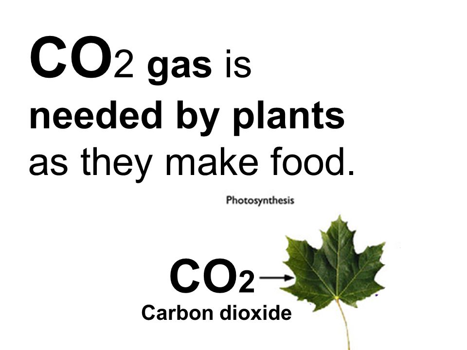 CO2 gas is needed by plants as they make food.