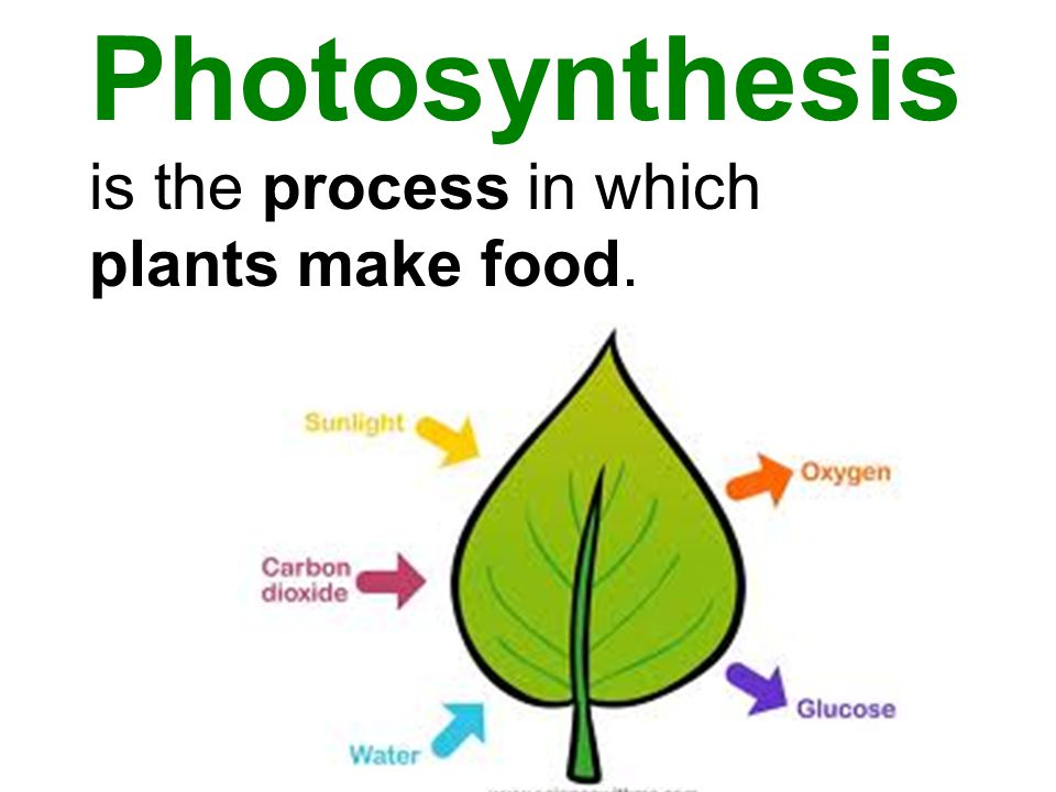 Photosynthesis is the process in which plants make food.