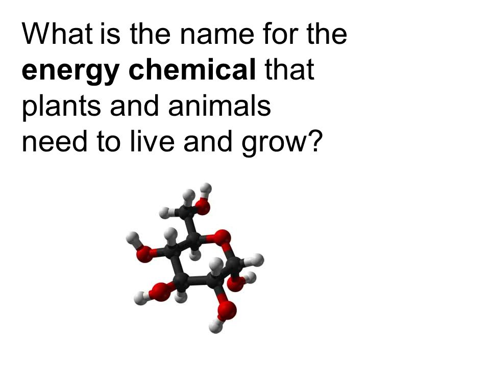 What is the name for the energy chemical that plants and animals need to live and grow