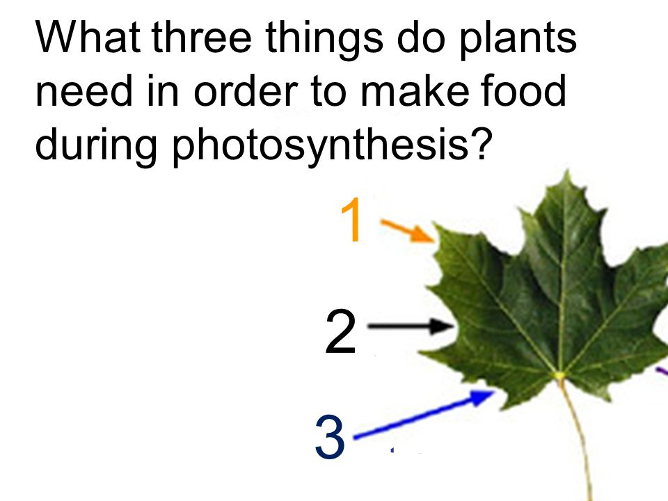 What three things do plants need in order to make food during photosynthesis