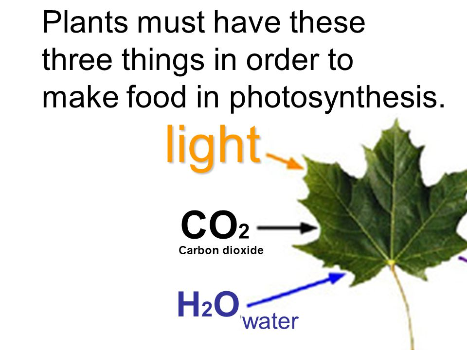 Plants must have these three things in order to make food in photosynthesis.