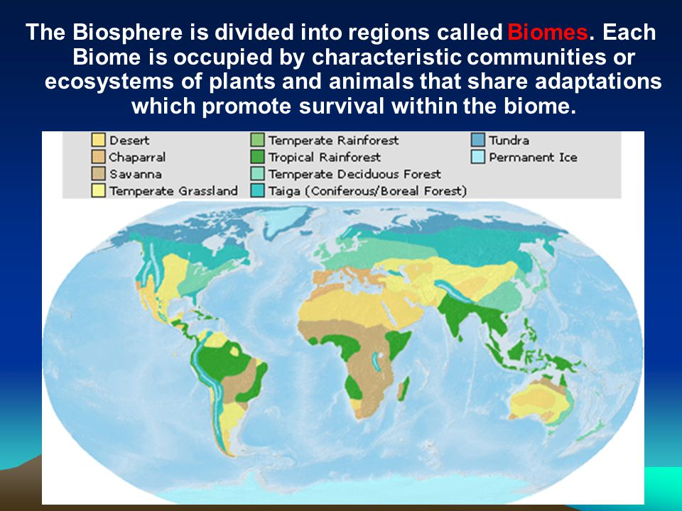 The Biosphere is divided into regions called Biomes