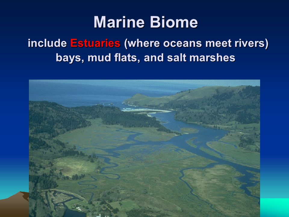 Marine Biome include Estuaries (where oceans meet rivers) bays, mud flats, and salt marshes