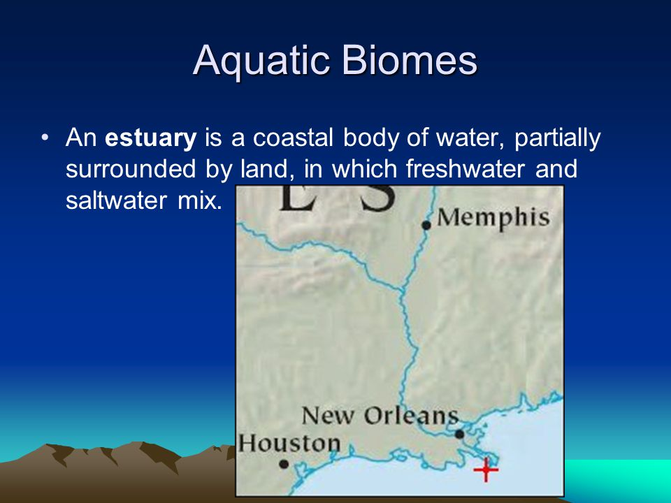 Aquatic Biomes An estuary is a coastal body of water, partially surrounded by land, in which freshwater and saltwater mix.