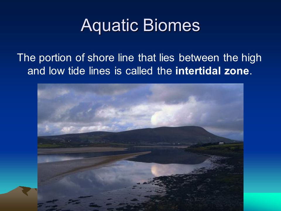 Aquatic Biomes The portion of shore line that lies between the high and low tide lines is called the intertidal zone.