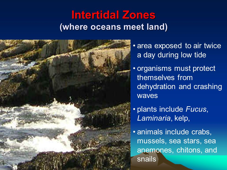 Intertidal Zones (where oceans meet land)